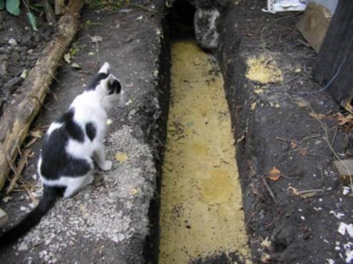 Я и главный архитектор проекта (кот) осматриваем объект
